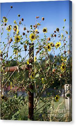 Canvas Print featuring the photograph Wild Growth by Erika Weber