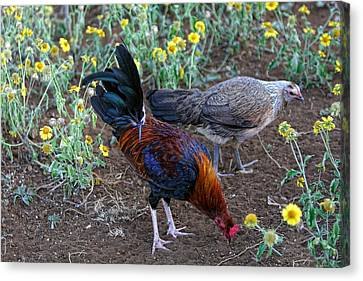 Wild Hen And Rooster Canvas Print by Linda Phelps
