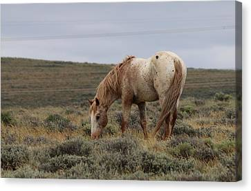 Canvas Print featuring the photograph Wild Horse by Christy Pooschke