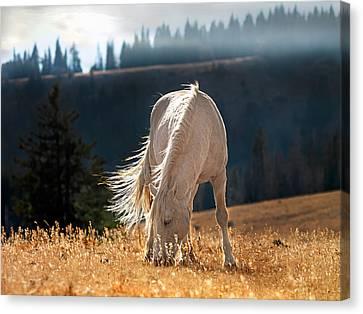 Wild Horse Cloud Canvas Print by Leland D Howard