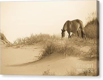 Wild Horse Canvas Print by Diane Diederich