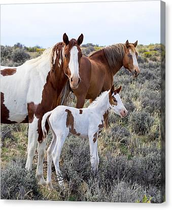 Wild Horse Family Portrait Canvas Print by Nadja Rider