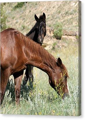Wild Horse Mama And Her Baby Canvas Print