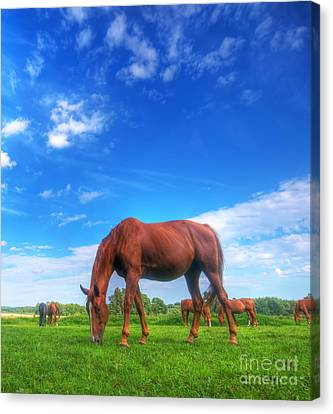 Wild Horse On The Field Canvas Print by Michal Bednarek