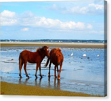 Wild Horses And Ibis 2 Canvas Print