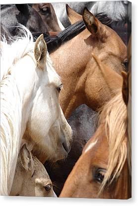 Wild Horses No6 Canvas Print