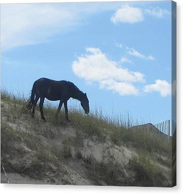 Wild Horses Of Corolla 3 Canvas Print by Cathy Lindsey