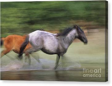 Wild Horses Running Canvas Print by Art Wolfe