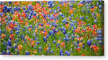 Wild In Texas Canvas Print by David  Norman