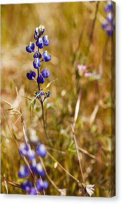 Wild In The Field Canvas Print
