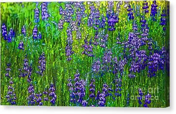 Wild Lupine Canvas Print