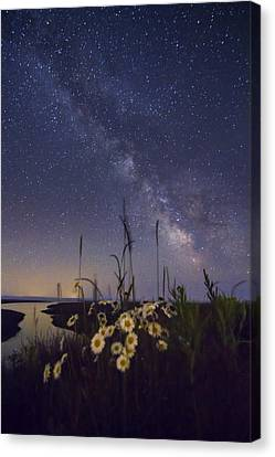 Wild Marguerites Under The Milky Way Canvas Print by Mircea Costina Photography