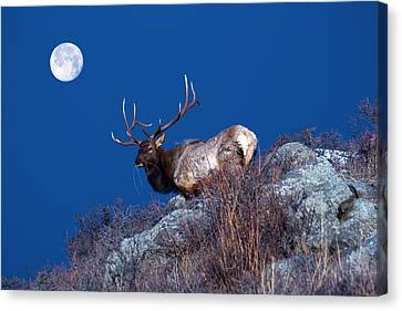 Wild Moon Canvas Print by Shane Bechler