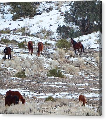 Wild Mustangs In A Nevada Winter Canvas Print by Bobbee Rickard