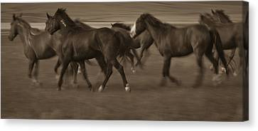 Wild Mustangs Of New Mexico 17 Canvas Print