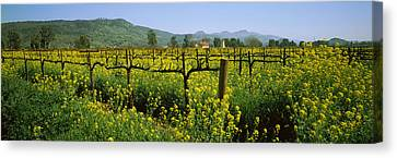 Winemaking Canvas Print - Wild Mustard In A Vineyard, Napa by Panoramic Images