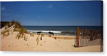 Wild On The Beach Canvas Print by John Harding