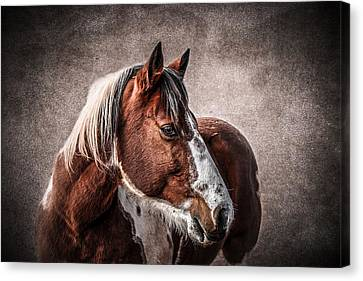 Wild One Canvas Print by Doug Long