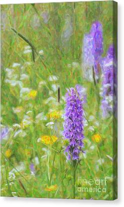 Wild Orchid Watercolour  Canvas Print by Tim Gainey
