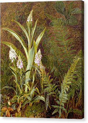 Wild Orchids Canvas Print by Marian Emma Chase