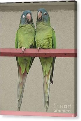 Wild Parrots Canvas Print