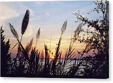 Canvas Print featuring the photograph Wild Plumes by Michele Kaiser