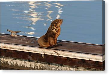 Canvas Print featuring the photograph Wild Pup Sun Bathing by Christy Pooschke
