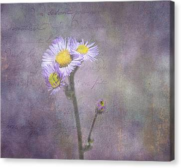 Wild Purple Aster  Canvas Print by Betty  Pauwels