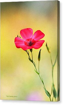 Wild Red Flower Canvas Print by Tom Janca