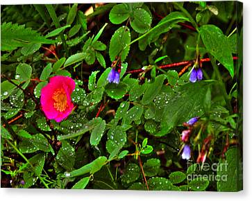 Canvas Print featuring the photograph Wild Rose And Bluebell by Sam Rosen