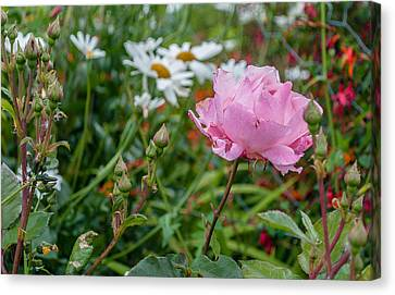 Canvas Print featuring the photograph Wild Rose by Sergey Simanovsky