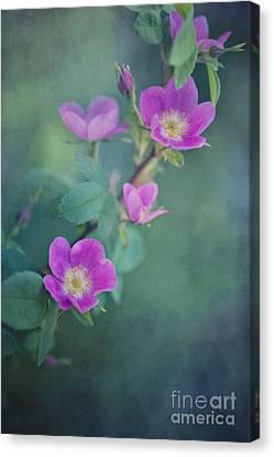 Wild Roses Canvas Print by Priska Wettstein