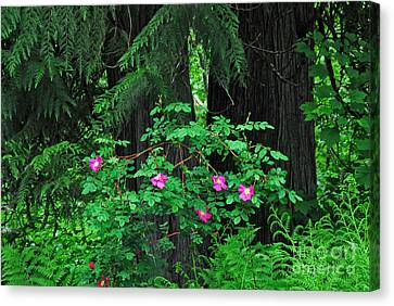 Canvas Print featuring the photograph Wild Roses by Sam Rosen
