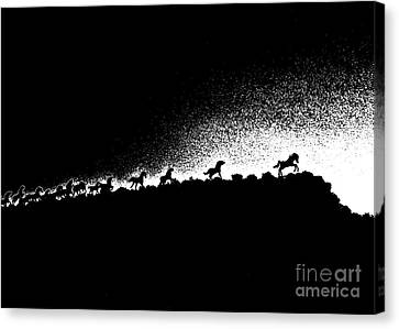 Wild Stallions Silhouette Canvas Print by Chuck Flewelling