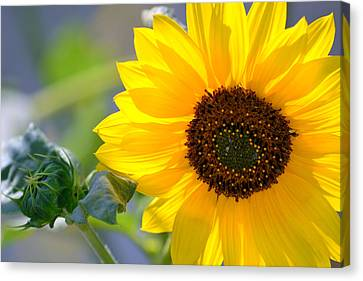 Canvas Print featuring the photograph Wild Sunflower by Nadalyn Larsen
