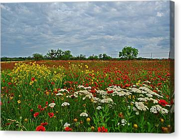 Wild Texas Canvas Print