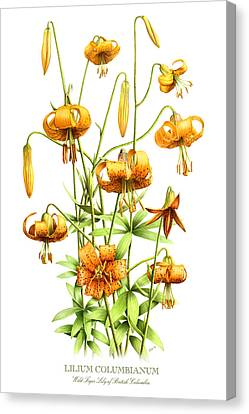 Wild Tiger Lilies Canvas Print by Artellus Artworks