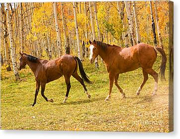 Wild Trotting Autumn Horses Canvas Print by James BO  Insogna