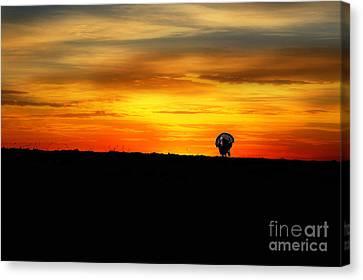 Wild Turkey At Sunset Canvas Print by Dan Friend