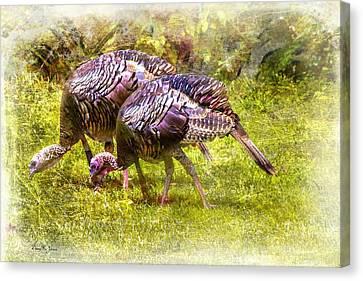 Wild Turkey Hens Canvas Print by Barry Jones