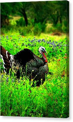 Wild Turkey Water Color Canvas Print by Randy Stephens