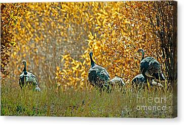 Meleagris Canvas Print - Wild Turkeys And Fall Colors by Robert Bales