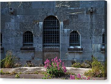 Wild Valerian Near Prison Walls In Fort Canvas Print