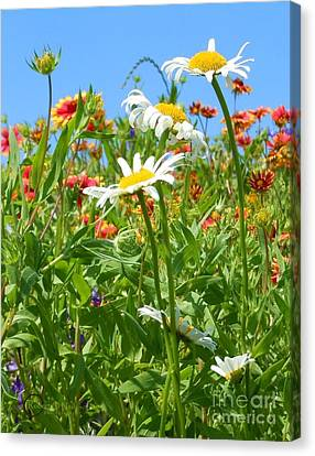 Canvas Print featuring the photograph Wild White Daisies #2 by Robert ONeil