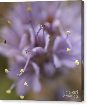 Wild Wildflower Canvas Print