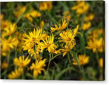Canvas Print featuring the photograph Wild Yellow Daisies by Susan D Moody