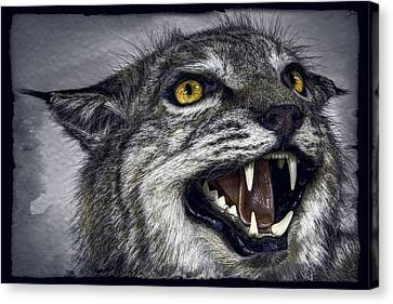 Kentucky Wildcats Canvas Print - Wildcat Ferocity by Daniel Hagerman