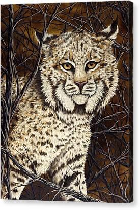 Bobcats Canvas Print - Wildcat by Rick Bainbridge