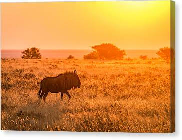 Gnu Canvas Print - Wildebeest Sunset - Namibia Africa Photograph by Duane Miller