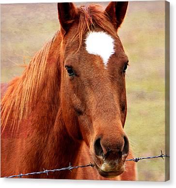 Wildfire - Equine Portrait Canvas Print